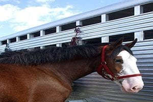 unsecured horse float loans;